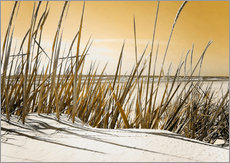  Nettesart - Dne Mecklenburg Strand Impression senf