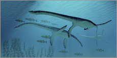 Corey Ford - Three Plesiosaurus dinosaurs migrate with a school of fish.