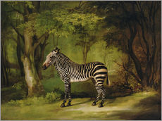 George Stubbs - Ein Zebra