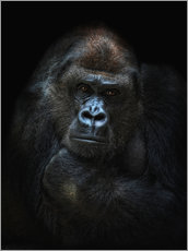 Joachim G. Pinkawa - she-gorilla