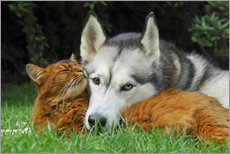 Katho Menden - Somali Katze und Siberian Husky kuscheln