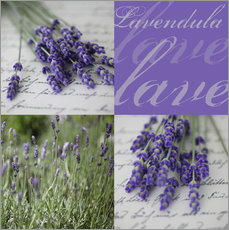 Kathrin Strassek - Lavendel Impressionen