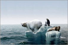  Keenpress - A polar bear (Ursus maritimus) is jumping on the ice
