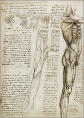 Leonardo da Vinci - Anatomische Studie