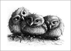 Stefan Kahlhammer - Three young owls - owlets
