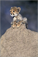 Theo Allofs - Africa, Namibia.  Animal rehabilitation farm.  Cheetah cub on termite mound (Acinonyx jubatus)