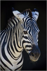 Timo Geble - zebra : study I