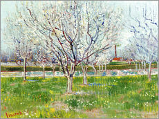 Vincent van Gogh - Blossoming orchard. 1888