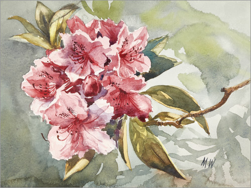 Premium-Poster Rhododendron Aquarell