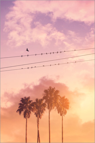 Premium-Poster Birds on a wire
