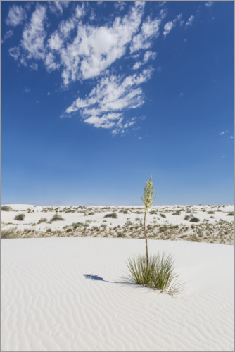 Premium-Poster White Sands Impression