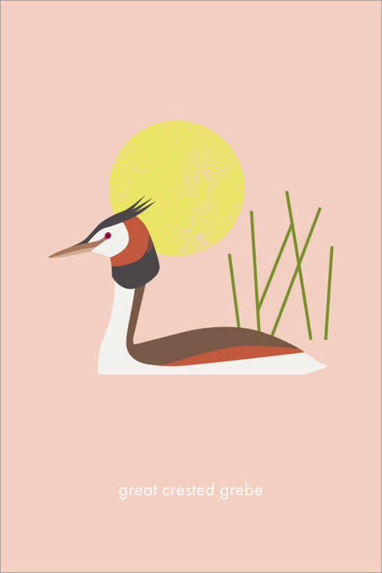 Premium-Poster Great crested grebe