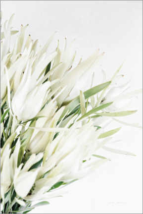 Gallery Print  Leucadendron - Elise Catterall