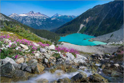 Premium-Poster Wildblumen am Upper Joffre Lake