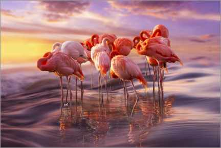 Hartschaumbild  Flamingo Siesta - Adrian Borda