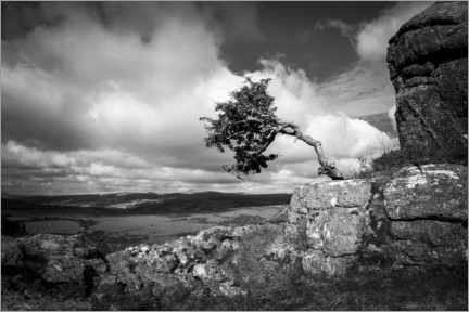 Leinwandbild  Windgepeitschter Baum in Dartmoor, England - Matthew Williams-Ellis