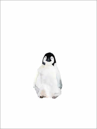 Gallery Print  Pinguin cool - Mantika Studio