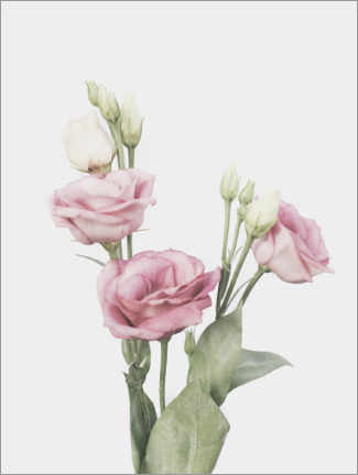 Gallery Print  Lisianthus I - Sisi And Seb