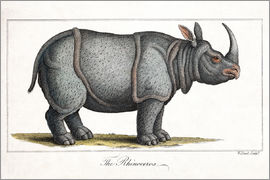 Paul D. Stewart - 1823 Indian Rhinoceros colour engraving