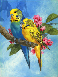 John Francis - 25916 Budgies on Blue Background