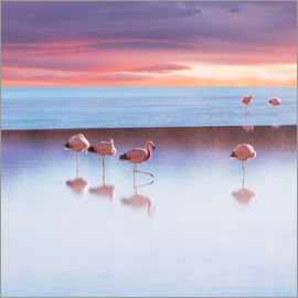 Andenflamingos, Bolivien