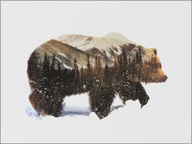 Andreas Lie - Arctic Grizzly Bear