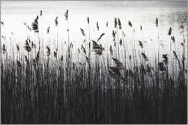 Mareike Böhmer Photography - At The Lake