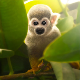 Photoplace Creative - baby monkey