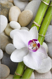 Andrea Haase Foto - Bambus und Orchidee
