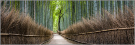 Jan Christopher Becke - Bambuswald Panorama in Sagano Arashiyama in Kyoto, Japan