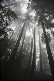 Paul Quayle - Treetops in fog