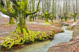 age fotostock - Beechwood and rivulet. Otzarreta, Gorbeia Natural Park, Biscay, Spain, Europe.