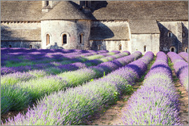 Matteo Colombo - Famous Senanque abbey with its lavender field, Provence, France