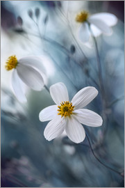 Mandy Disher - bidens