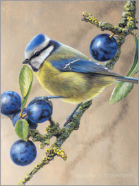 Blue yellow bird perching on tree branch with fruits