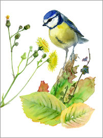 Verbrugge Watercolor - Blaumeise Vogel und Sowthistle