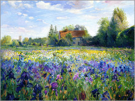 Timothy Easton - Field of flowers in the sunset