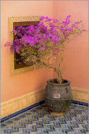 Emily M. Wilson - Bougainvillea in a Mediterranean ambience