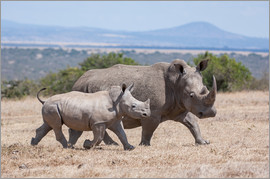 Ingo Gerlach - White rhino with baby