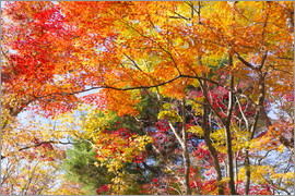 Jan Christopher Becke - Colorful autumn leaves in the forest
