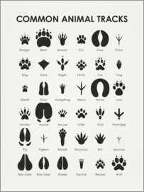 Iris Luckhaus - Common Animal Tracks