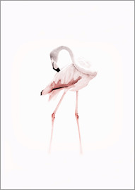 Jaysanstudio - Der Flamingo