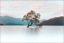 Nicky Price - Der Wanaka Baum