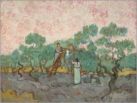Vincent van Gogh - The olive pickers