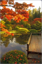 Richard Duval - A Japanese garden with exotic woods