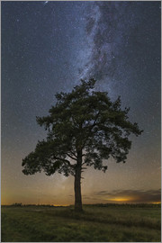 Yuri Zvezdny - Lonely tree under the Milky Way