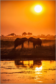 Roberto Sysa Moiola - Elephants at sunset, Chobe Park,Botswana, Africa