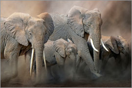 Peter Roder - A group of elephants