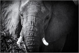 age fotostock - Etosha National Park, Namibia, Africa. Elephants at the waterhole.