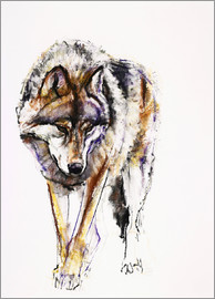 Mark Adlington - European Wolf